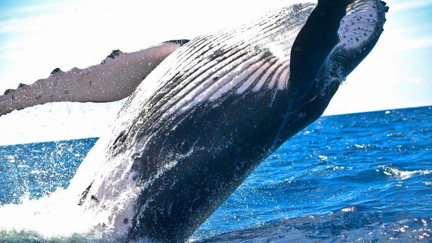 畳み込みニューラルネットワークを用いてザトウクジラの唄声を聴く